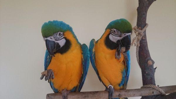 Keksíky pre papagáje |