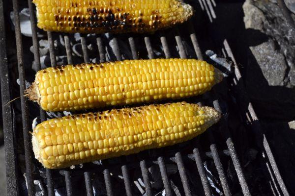 Grilovaná kukurica |